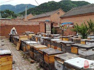 蜂场直销自产纯天然蜂蜜 蜂王浆 巢蜜
