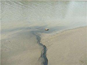 第六净水厂附近,有黑色的水排入到民兴河内。