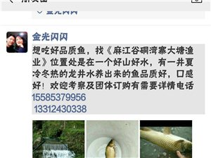 麻江谷硐擺沙大唐供應原生態冷水魚1000斤,泥鰍500斤
